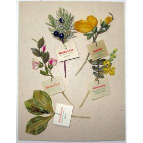 WHW - Heilpflanzen, 29. und 30. März 1941 - 5 Wachspapierblumen