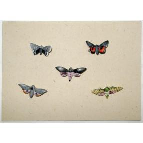 WHW - Schmetterlinge